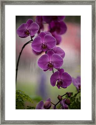 The Waiting Framed Print by Mike Reid
