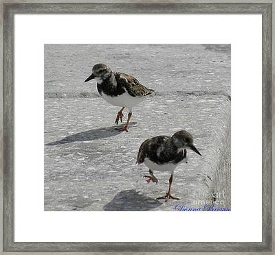 The Walk Framed Print by Donna Brown
