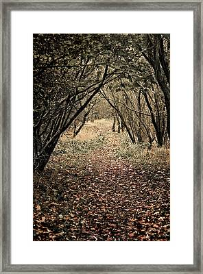 The Walk Framed Print by Meirion Matthias