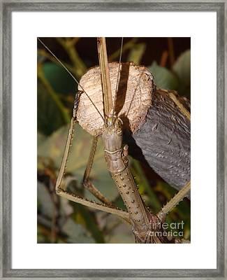 The Walking Stick Framed Print by Sara  Raber