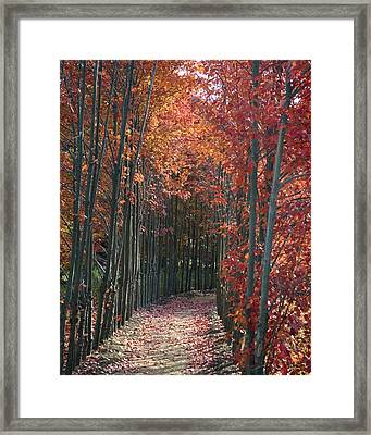 The Wall Of Trees Framed Print