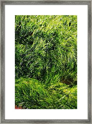 The Walls Are Alive - Seaside Abstract Framed Print by Aidan Moran