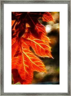 The Warmth Of Fall Framed Print