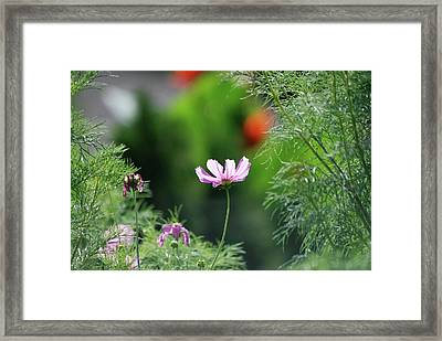 Framed Print featuring the photograph The Warmth Of Summer by Thomas Woolworth