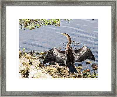 The Warmth Of The Sun Framed Print by Norman Johnson