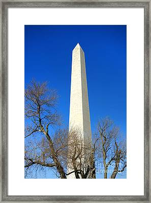 The Washington Monument And The Big Old Tree On The National Mall Framed Print by Olivier Le Queinec