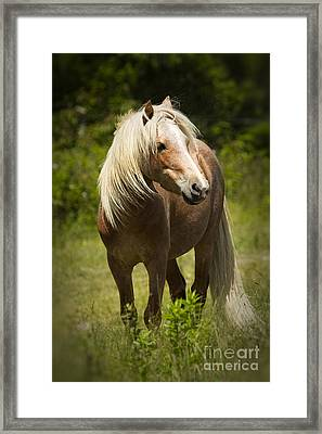 The Watch Framed Print by Carrie Cranwill