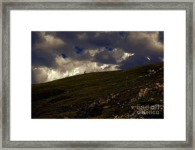 The Watchers Framed Print by Jon Burch Photography