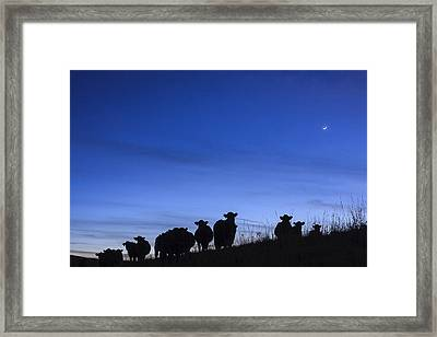 Framed Print featuring the photograph The Watchers by Scott Bean