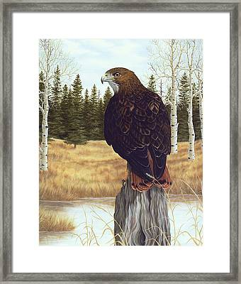 The Watchful Eye Framed Print by Rick Bainbridge