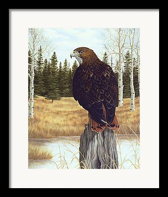 Hawk Paintings Framed Prints