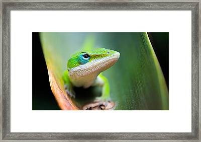 The Watching Eye Framed Print by Shelby  Young