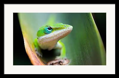 Brown Snake Framed Prints
