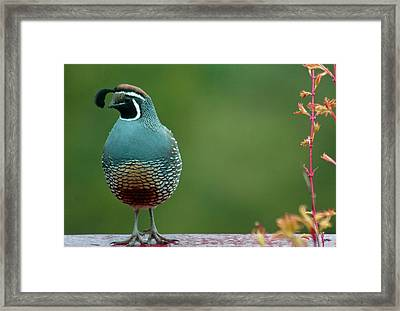 The Watchman Framed Print by Annie Pflueger