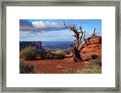 The Watchman Framed Print by Jim Garrison