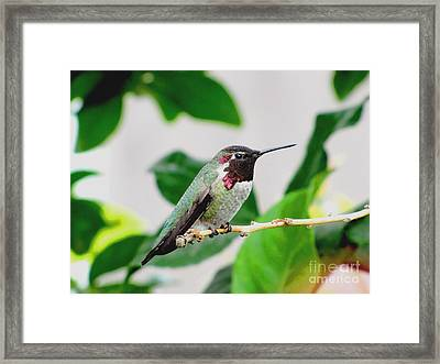 The Watchman On Duty Framed Print by Marilyn Smith