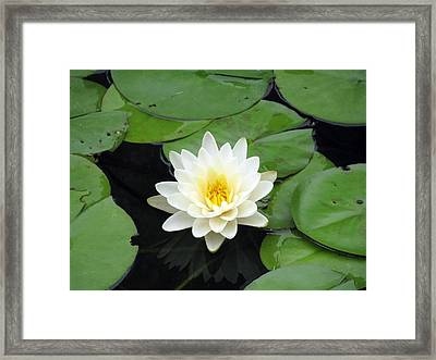 Framed Print featuring the photograph The Water Lilies Collection - 01 by Pamela Critchlow
