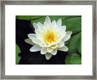 Framed Print featuring the photograph The Water Lilies Collection - 02 by Pamela Critchlow