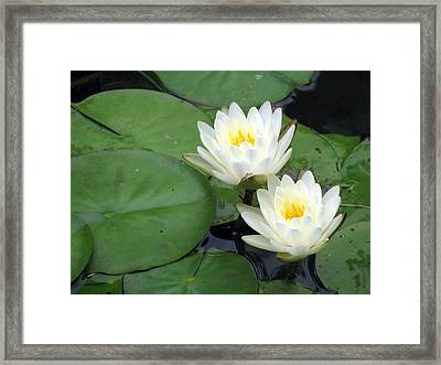 Framed Print featuring the photograph The Water Lilies Collection - 06 by Pamela Critchlow