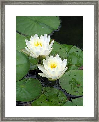 Framed Print featuring the photograph The Water Lilies Collection - 07 by Pamela Critchlow