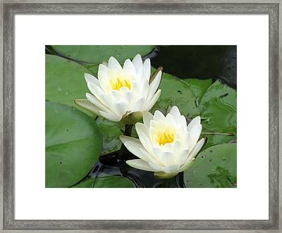 Framed Print featuring the photograph The Water Lilies Collection - 08 by Pamela Critchlow