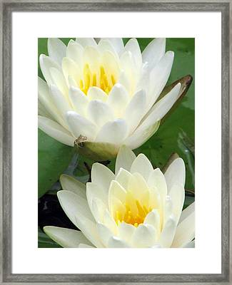 Framed Print featuring the photograph The Water Lilies Collection - 09 by Pamela Critchlow