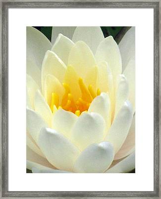 Framed Print featuring the photograph The Water Lilies Collection - 10 by Pamela Critchlow