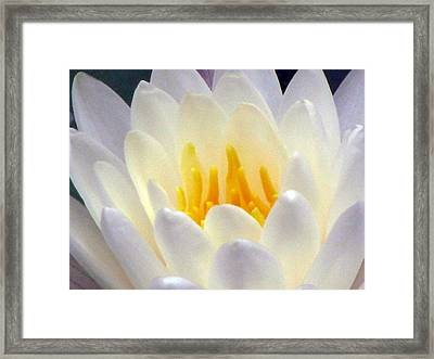 Framed Print featuring the photograph The Water Lilies Collection - 11 by Pamela Critchlow