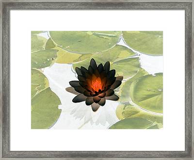 Framed Print featuring the photograph The Water Lilies Collection - Photopower 1034 by Pamela Critchlow
