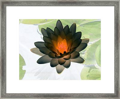 Framed Print featuring the photograph The Water Lilies Collection - Photopower 1035 by Pamela Critchlow