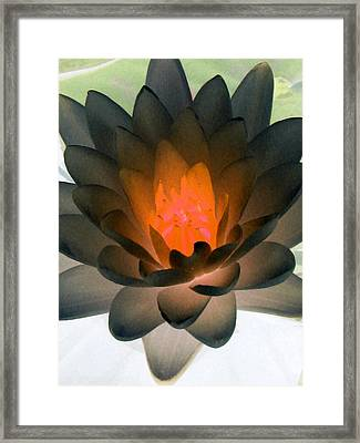 Framed Print featuring the photograph The Water Lilies Collection - Photopower 1036 by Pamela Critchlow