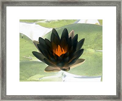 Framed Print featuring the photograph The Water Lilies Collection - Photopower 1037 by Pamela Critchlow