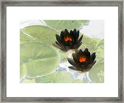 Framed Print featuring the photograph The Water Lilies Collection - Photopower 1039 by Pamela Critchlow