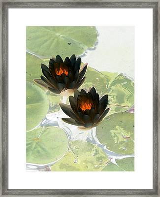 Framed Print featuring the photograph The Water Lilies Collection - Photopower 1040 by Pamela Critchlow