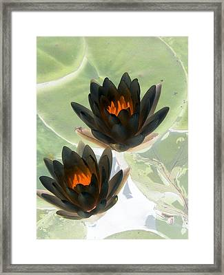 Framed Print featuring the photograph The Water Lilies Collection - Photopower 1046 by Pamela Critchlow