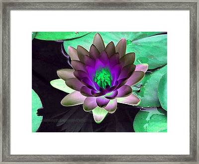Framed Print featuring the photograph The Water Lilies Collection - Photopower 1114 by Pamela Critchlow