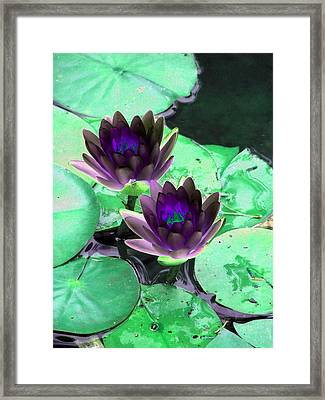Framed Print featuring the photograph The Water Lilies Collection - Photopower 1119 by Pamela Critchlow