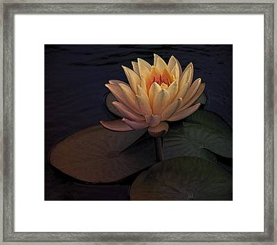 The Waterlily Framed Print by Jill Balsam