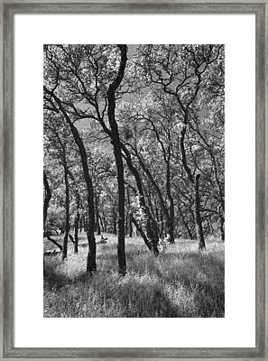 The Way You Move Me Framed Print by Laurie Search