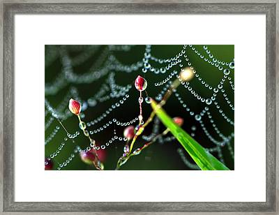 The Web And The Pods Framed Print by Carolyn Fletcher