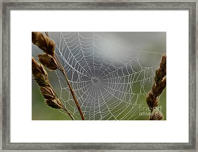 The Web Framed Print by Kerri Farley