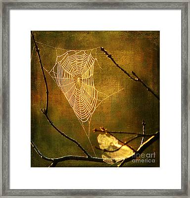 The Web We Weave Framed Print by Darren Fisher