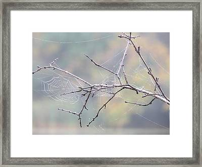 Framed Print featuring the photograph The Web's Branch by Nikki McInnes