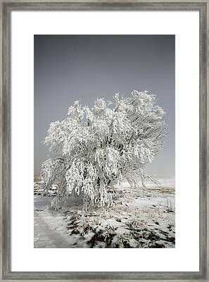 The Weight Of Winter Framed Print by John Haldane