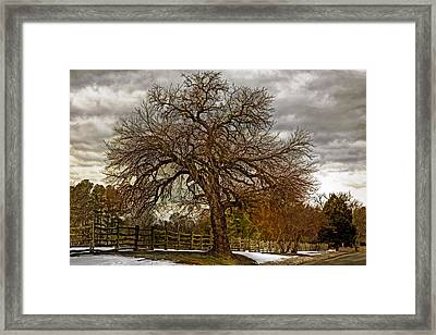 The Welcome Tree Framed Print by Jerry Gammon