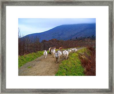 The Welcoming Committee Framed Print by Rick Todaro