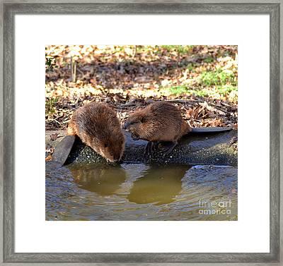 The Whispering Beaver Framed Print by Eva Thomas
