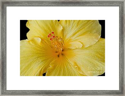 The Whispers Of Heaven  Framed Print by Sharon Mau