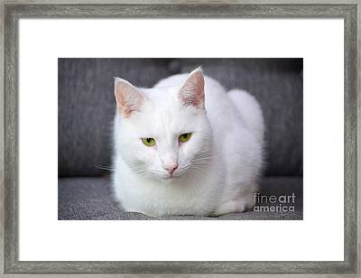 The White Beauty Framed Print by Tine Nordbred