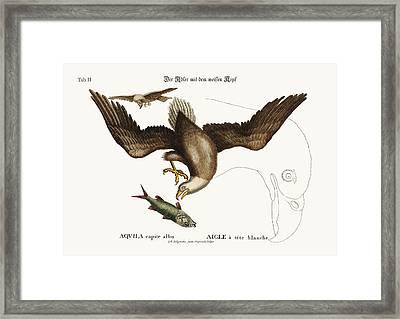 The White-headed Eagle Framed Print by Splendid Art Prints
